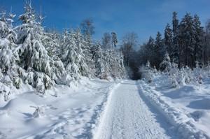 Auf dem Waldweg Richtung Kaiserturm