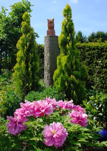 Pfingstrosen in Lissi's Garten