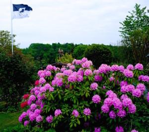 Rhododendron in Herbie's Garten