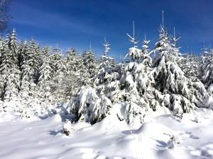 Der Wald im zauberhaften Winterkleid