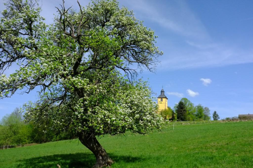 Neunk-Kirch-Baum